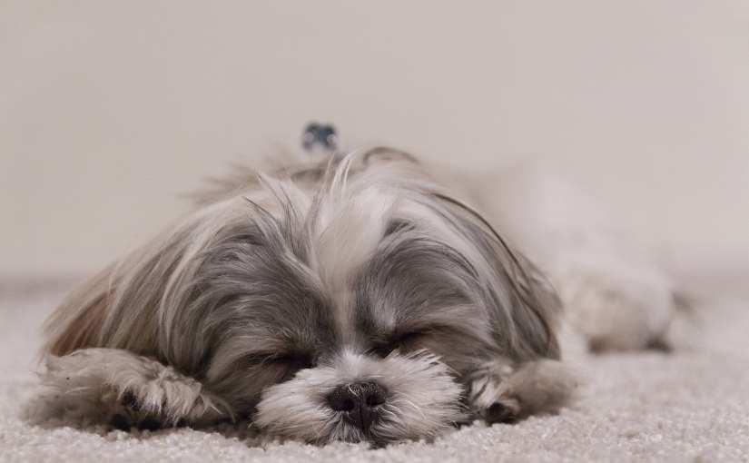 Do Dogs Dream?